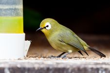 Free Small Colorful Tropical Bird Eating Royalty Free Stock Images - 14691449