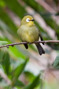 Free Small Colorful Tropical Bird On A Branch Royalty Free Stock Photo - 14691465