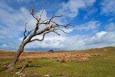 Tree Standing Near The Dunes Stock Photo