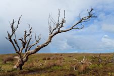 Tree Standing Near The Dunes Royalty Free Stock Photography