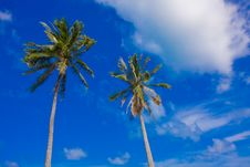Free 2 Palm Trees On A Blue Sky Stock Photo - 14692280