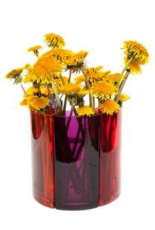 Yellow Dandelions Stock Photography