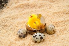 Three Eggs And Chickens In A Nest Stock Photos