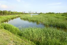 Free Everglade Park Stock Photo - 14693050