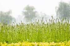 Free Quiet Garden Stock Photography - 14693492