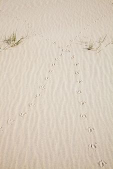 Free Tracks Of A Bird In The Dunes Stock Photo - 14694100
