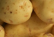Free Potatoes Royalty Free Stock Photography - 14694277