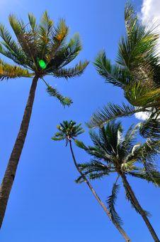 Free Coconut Trees Stock Photos - 14694353