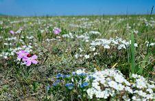 Free Ladybug On Flower Royalty Free Stock Images - 14694569