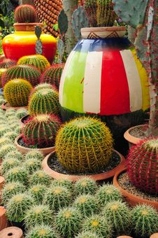 Free Cactuses Royalty Free Stock Photos - 14695388