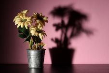 Free Flowers In A Pink Room Royalty Free Stock Photography - 14696367
