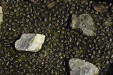 Free Decorative River Stone Royalty Free Stock Photos - 14697018