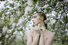 Free Young Sexy Girl Near Blooming Apple Tree Stock Photo - 14698010