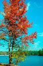 Free Autumn Foliage Around Stone Mountain. Stock Image - 1475361