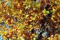 Free Autumn Foliage Royalty Free Stock Photography - 1479237