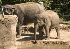 Free Baby Elephant Stock Photo - 1470070