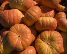 Free Pumpkin Close Up Royalty Free Stock Photography - 1470217