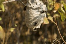 Free Wasp Nest Stock Image - 1470291