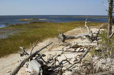 Free Driftwood On Beach Stock Image - 1471391