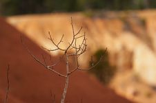 Free Branch Stock Photography - 1472242