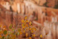 Free Autumn Leaves Stock Photos - 1472243