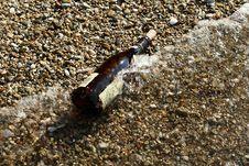 Free Bottle Royalty Free Stock Image - 1472826