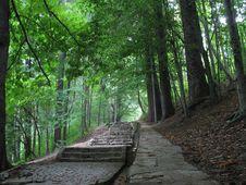 Free Emerald Path Stock Photo - 1473030
