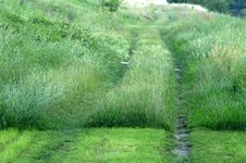 Way In Grass Royalty Free Stock Photography