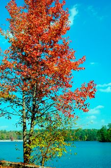 Free Autumn Foliage Around Stone Mountain. Stock Image - 1475361