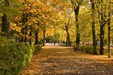 Free Autumnal Boulevard Royalty Free Stock Image - 1475536