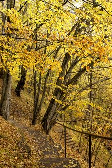 Free Autumn Forest Stock Images - 1476074