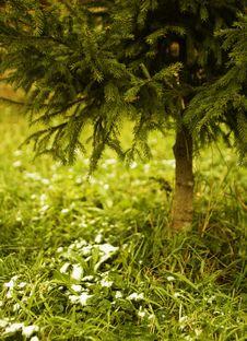 Free Christmas-tree Stock Photos - 1476113