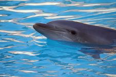 Dolphin Smiling Royalty Free Stock Photo