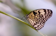 Free Close-up Of A Beautiful Butterfly Stock Images - 1476624