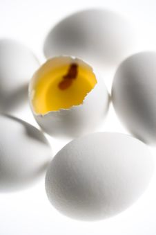 Free Egg Concept Stock Photography - 1476632