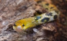 Free Close-up Of A Snake Stock Images - 1476834