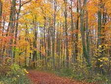 Free Fall Pathway Royalty Free Stock Images - 1477189