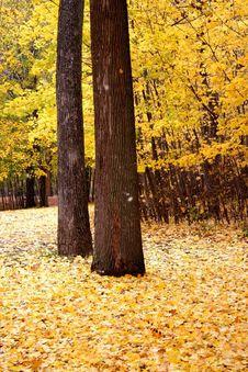 Free Yellow Autumn Stock Photo - 1477640