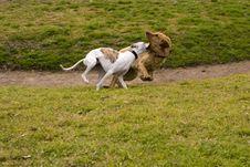 Free Perros Corriendo_9556. Royalty Free Stock Photography - 1477727