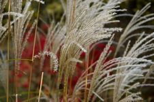 Free Autumn Grass Stock Photography - 1477782