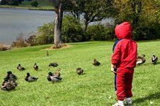 Free Boy Watching Ducks Stock Photos - 1477853