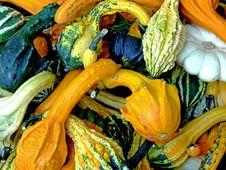 Free Pumpkin Background Royalty Free Stock Photo - 1478225