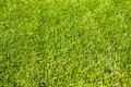 Free Green Grass Field Stock Photo - 14705170