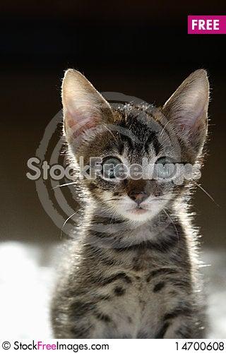 Adorable curious tabby kitten Stock Photo
