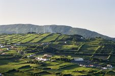 Hedge Landscape Of Faial, Azores Royalty Free Stock Images
