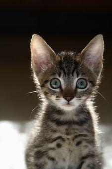 Adorable Curious Tabby Kitten Royalty Free Stock Photos