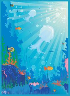 Free Sea Life Stock Photo - 14700740