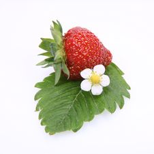 Free Strawberry Royalty Free Stock Photos - 14701488
