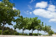 Free Tree And Sky Royalty Free Stock Image - 14701816