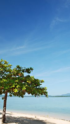 Free Tree On A Beach Royalty Free Stock Photography - 14702347